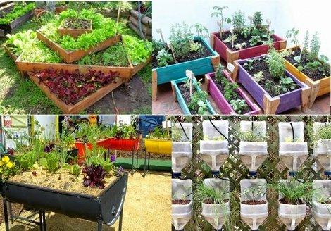 Campana noticias se abrieron las inscripciones para el for Plantas para huerta organica